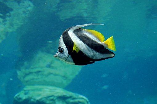 Fish, Tropical, Underwater, Ocean
