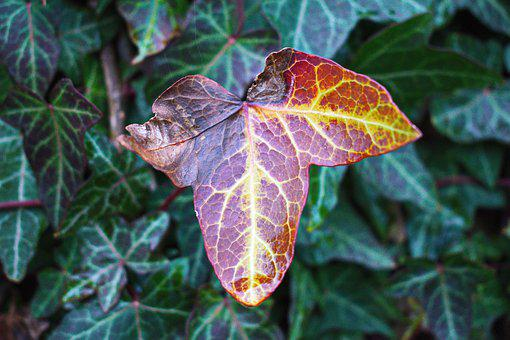 Just A Leaf, Leaf, Died, Green, Colors, Nature, Forest