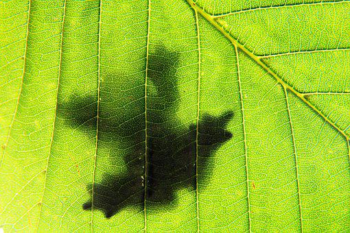 Frog, Green, Leaf, Shadow, Nature