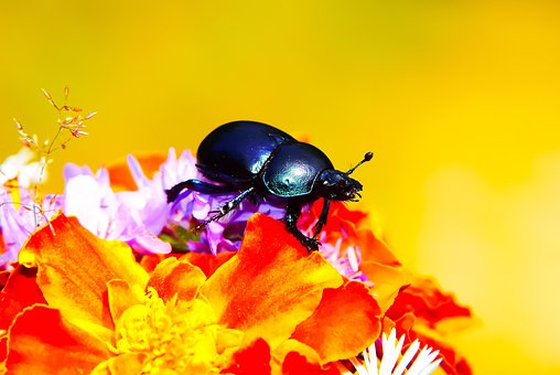 Forest Beetle, Insect, Bouquet Of Flowers, The Petals