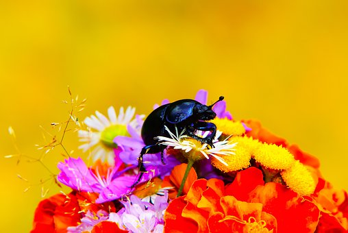 Forest Beetle, Insect, Bouquet Of Flowers, White Flower