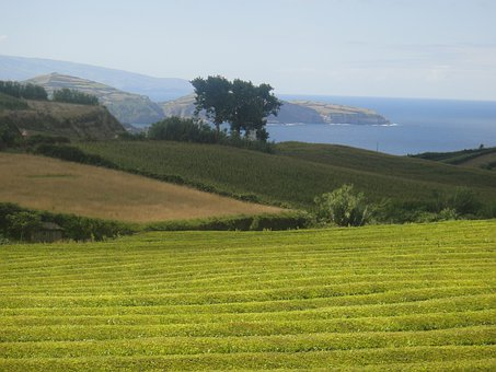 Azores, Portugal, Grass, Island, Landscape, Tourism