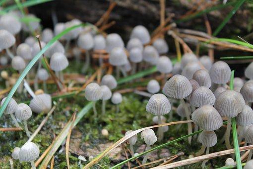 Mushrooms, Forest, Nature, Autumn, Forest Floor, Moss
