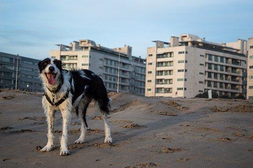 Dog, Portugal, Beach, Nature, Cute, Outdoor, Sweet, Sea