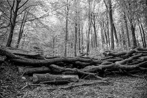 Black And White, Forest, Nature, Trees, Wood, Strains