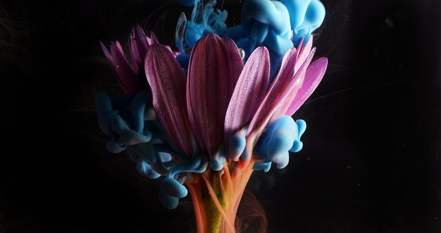 Flower, Paint, Jasmine, Watercolor, Drawing, Painting