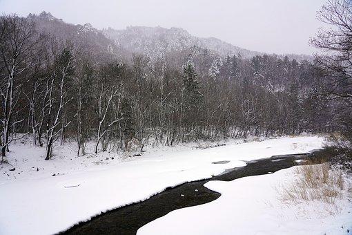Snow, Winter, Pine, Nature, Landscape, Wood, Scenery
