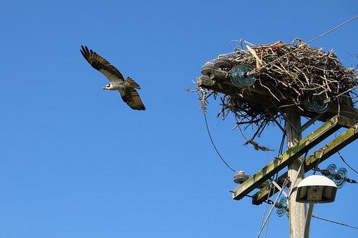 Bird, Adler, Raptor, Nature, Plumage, Animal World
