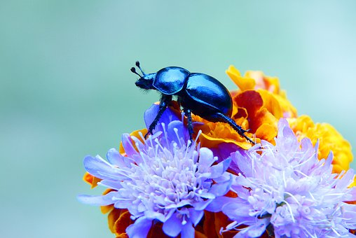 Forest Beetle, Insect, Bouquet Of Flowers, Posts