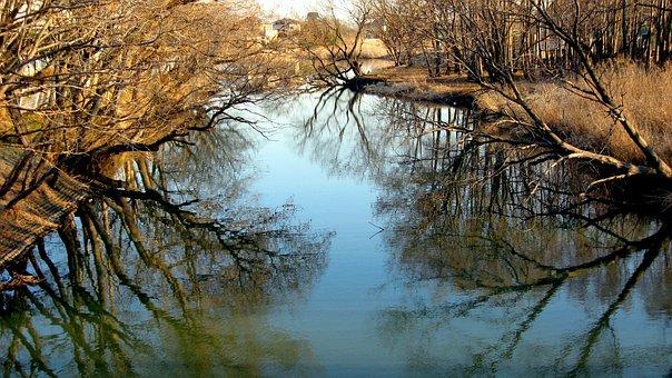 Natural, Landscape, River, Wood, Forest