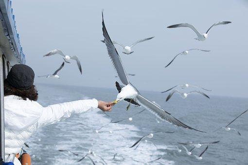 Seagull, Sea, Seagulls Flock, Feeding, Seize The Moment