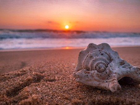 Sunrise, Sunset, Beach, Sea, Seashell