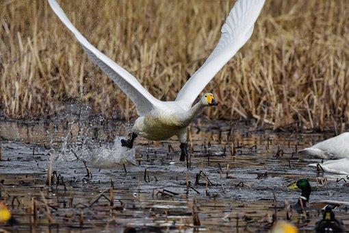 Animal, Pond, Water, Spray, Bird
