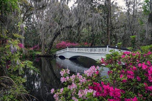 Garden, Azaleas, Bridge, Spring, Flowers, Nature, Plant