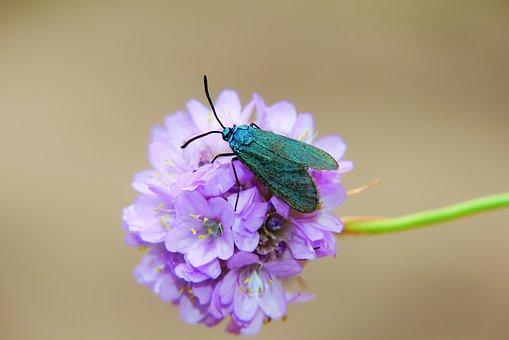 Lśniak Szmaragdek, A Moth, Flower, Posts, The Petals