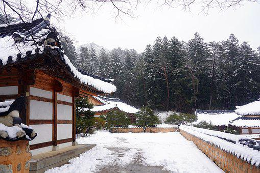 Korea, Temple, Section, Snow, Winter, Pine, Nature