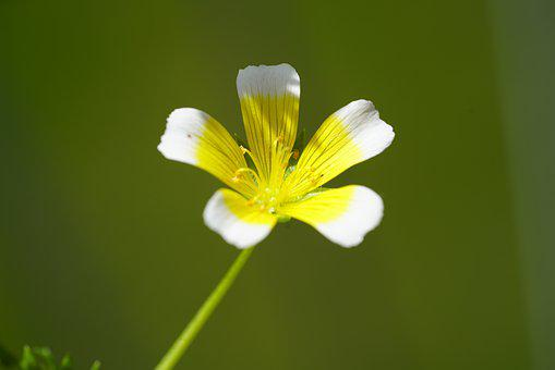 Blossom, Bloom, Flower, White, Yellow, Indoor Yellow