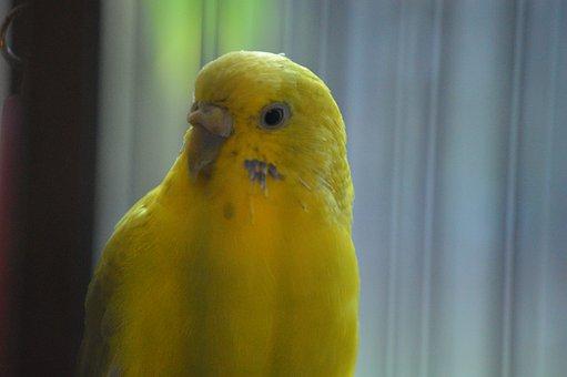 Bird, Yellow, Parrot, Nature, Animal, Colorful, Plumage