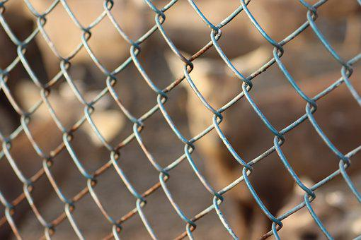 Cage, Cage Animals, Animal, Zoo, Nature, Wildlife