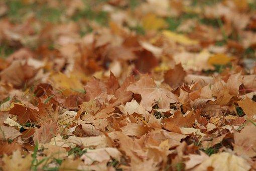 Foliage, Autumn, Nature, Oct, Figure, Leaves, Clone