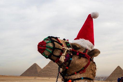 Camel, Pyramid, Hat, Santa, Egypt, Cairo, Giza, Travel