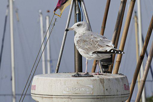 Seagull, Masts, Bird, Port, Flag, Sea, Feather