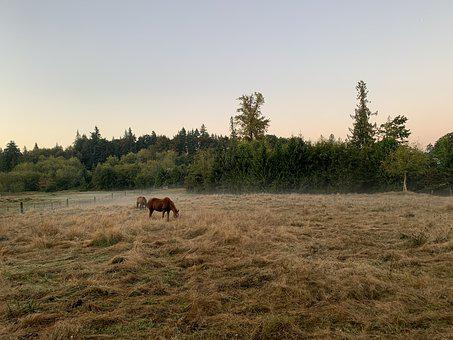 Horses, Dawn, Farm, Ranch, Nature, Sky, Fence, Country