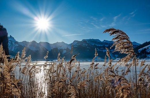 Sun, Reed, Nature, Landscape, Mood