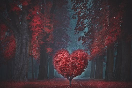 Valentine, Heart, Forest, Romantic, Love