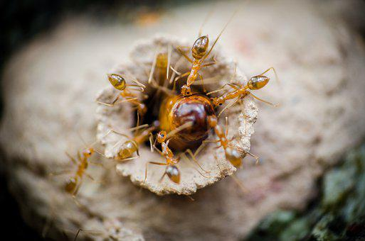 Ants, Egg, Nature, Insect, Red, Orange, Anthill, Bug