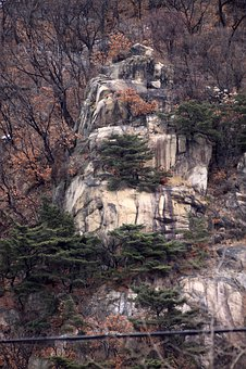 Mountain, Rock, Wood, Vitale, Cliff, Nature, Scenery