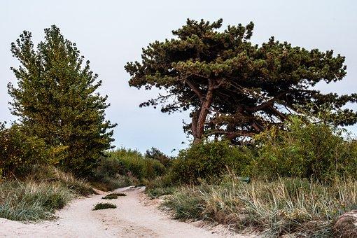 Tree, Road, Nature, Scenic, Scenery