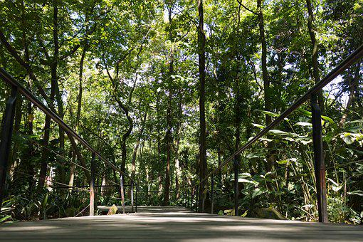 Path, Bridge, Forest, Tables, Wood