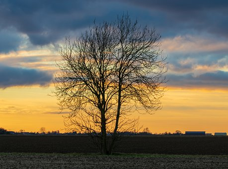Lone Tree, Single Tree, Sunset, Clouds, Rural, Nature