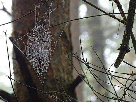 Spider Web, Forest, Nature, Color, Bug, Spin, Animals