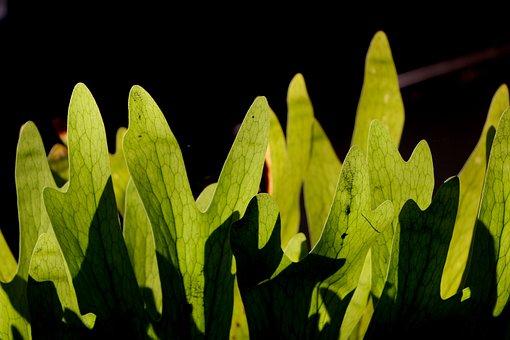 Leaf, Nature, Glow, Natural, Spring, Light, Morning