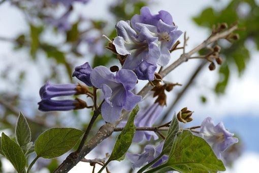 Purple, Flower, Tree, Bloom, Park, Garden, Sheet, Lilac