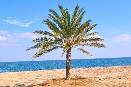 Palm Tree, Dates Tree, Tree, Sea