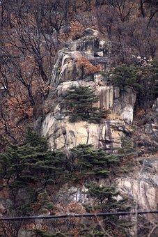 Mountain, Rock, Wood, Vitale, Cliff