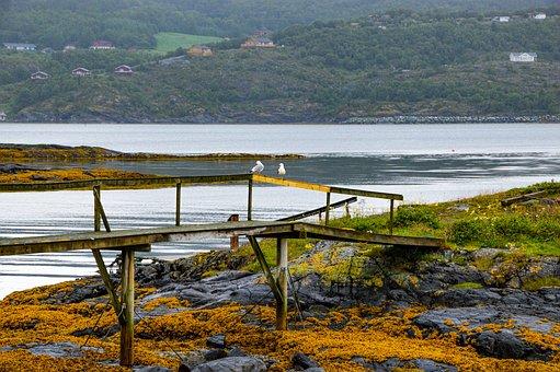 Lake, Sea, Fjord, Norway, Seagull, Coast, Water, Nature