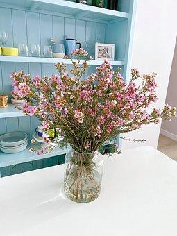 Wax Flower, Chamelaucium, Flowers, Blossom, Bloom