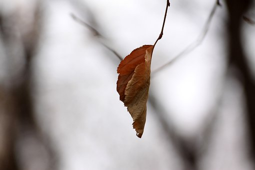 The Leaves, Autumn Leaves, Winter, Nature, Forest, Leaf
