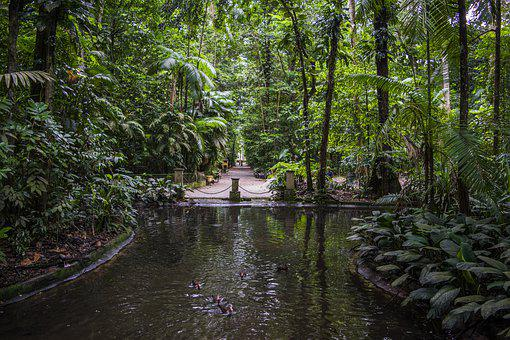 The Bosque Rodrigues Alves, Of Belém Do Pará, Amazon