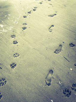 Beach, Dog, Paw Prints, Foot Prints, Sand