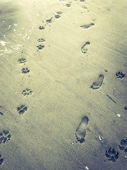Beach, Dog, Paw Prints, Foot Prints