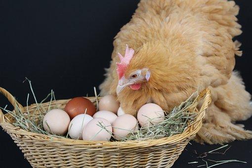 Egg, Nest Easter, Straw, Brown, Easter, Nest, Nature