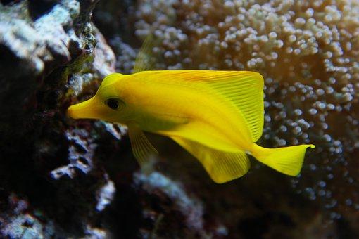 Fish, Aquarium, Water, Yellow, Coral