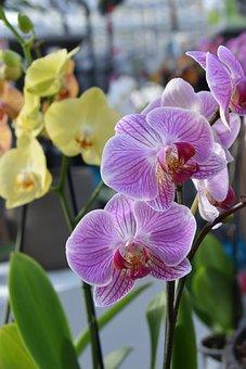 Orchids, Flower Orchids, Color Pink, Offer, Decoration