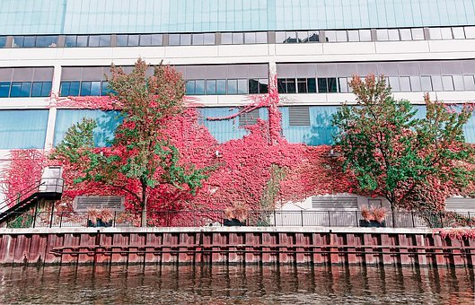 Flower, Wall, River, Plant, Red, Characteristic