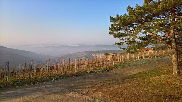Winter, Main, Sky, Tree, Fog, Haze